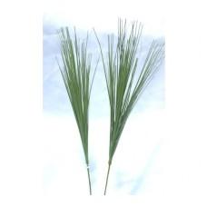 BEAR GRASS (IARBA URSULUI)